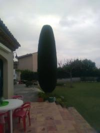 Taille de cyprès de Provence (fastigiés) par votre jardinier à St Laurent du Var